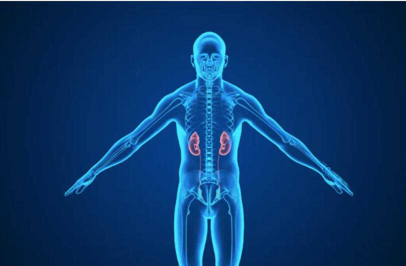 间充质干细胞回输修复慢性肾病!MSC自体间充质干细胞