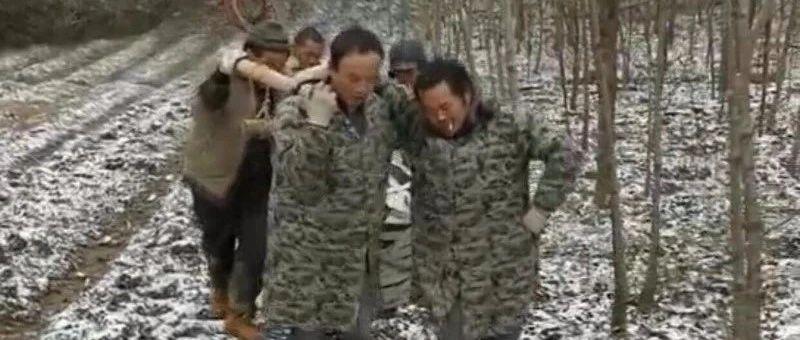 湖北宜昌22种珍稀树种落户省林木种质资源库
