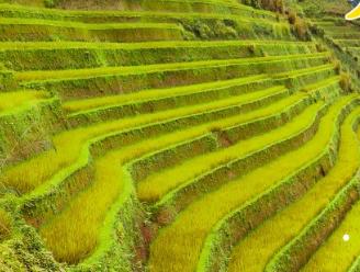 水稻种植生产的可持续发展有哪些
