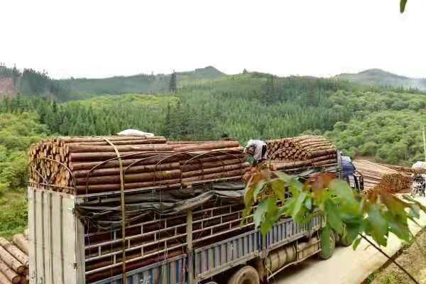 木桩货运物流