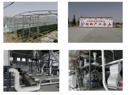 新疆和田塔瓦庫勒鄉阿克墩村 辣椒加工生產線設備項目