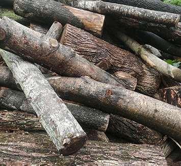 仿生原木加工工艺方法