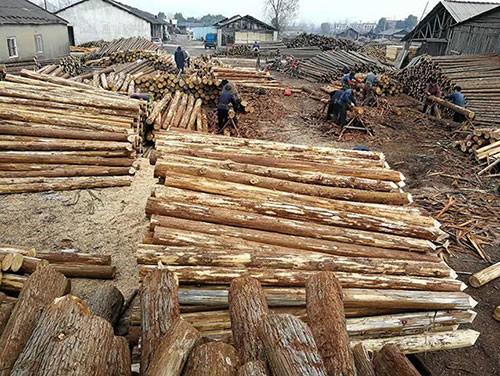 木材的多样性质,你知道吗?