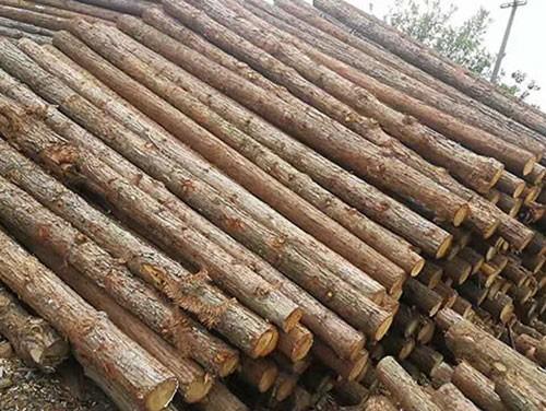 江苏快速固定高大树木木桩地锚的装置