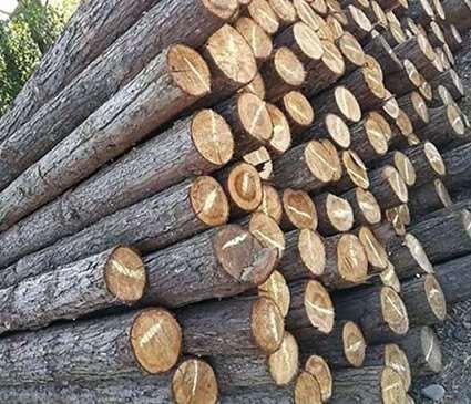 防止高回填土方下沉的木桩结构分析