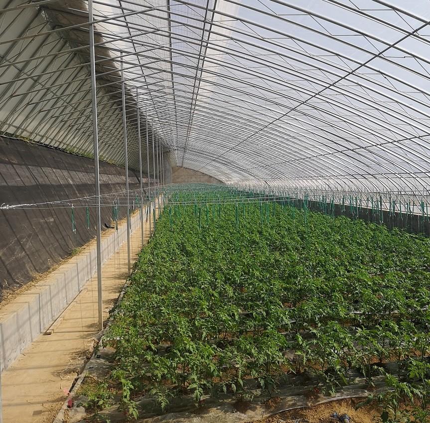 日光温室大棚冬季保温措施经典总结