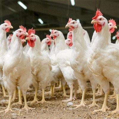 嘉兴专业生产禽药