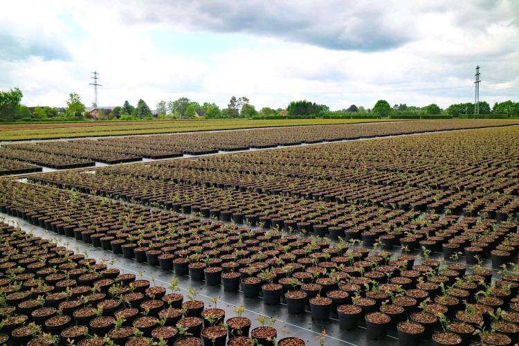 果园除草大趋势为啥是除草布?