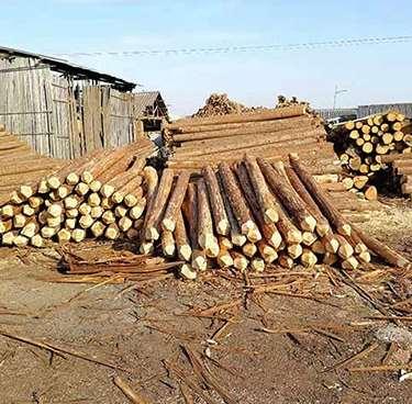 绿化杉木桩的用途有哪些