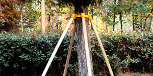 阿克苏绿化树支撑杆价格