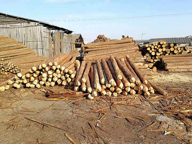 护坡木桩厂家