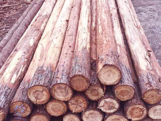 河道杉木桩