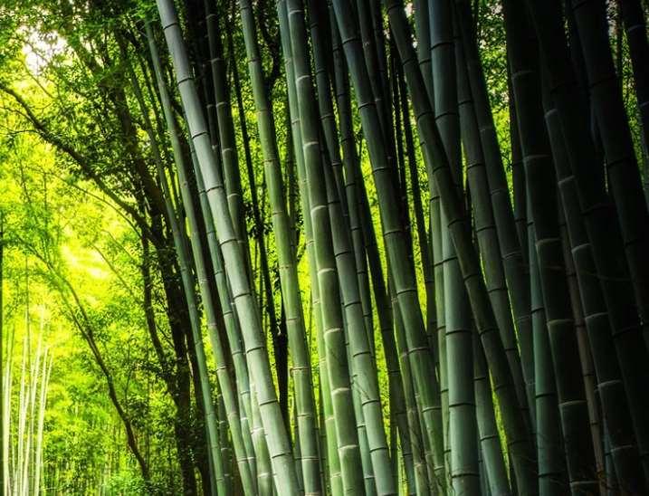 想要建造好竹房子需要注意的事项较多