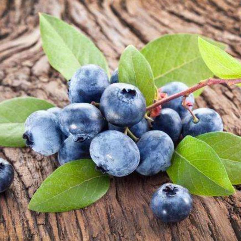 瑞卡蓝莓 种苗