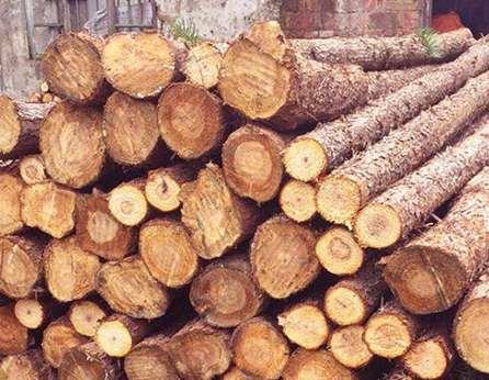 杉木桩应当如何合理使用