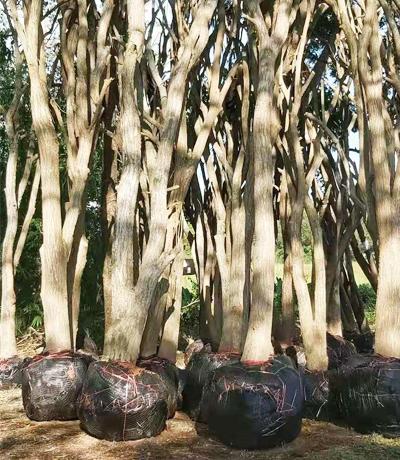苗木批发厂家的售后服务条款