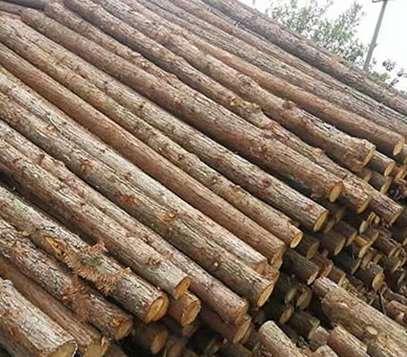 多功能仿树景观木桩的搭建