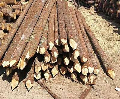 杉木桩为什么会发生老化现象