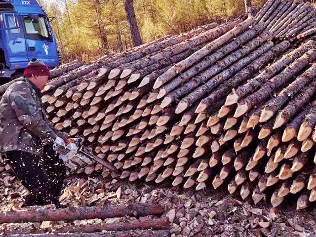 杉木桩在施工方面应如何进行防腐工作