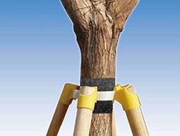 树木支撑固定器