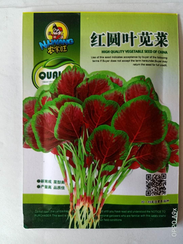 红圆叶苋菜种子