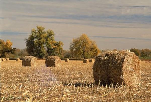 农业废弃物处理