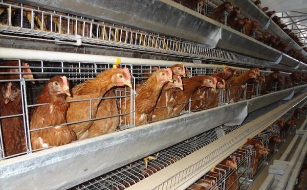 自動化養殖配置應用有哪些誤區?