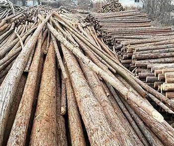 杉原木加工生产的注意事项