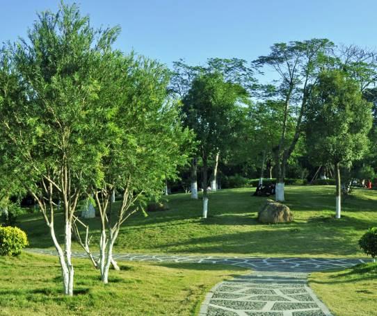 園林綠化中怎樣選擇苗木