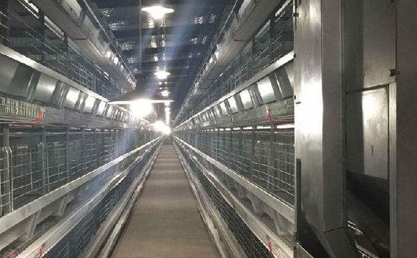 鸡舍环境控制器