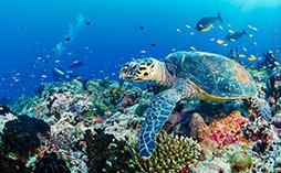 潜水常见问题