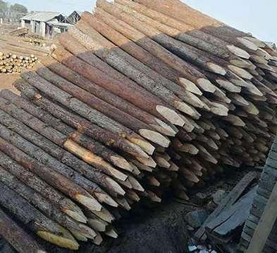 河道生态护岸桩木的利用方式