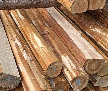 杉木樁受關注度高的因素