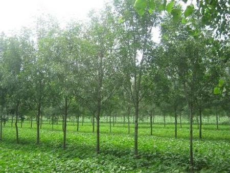 苗农们需注意,如何实现苗木的适销对路,现在告诉你