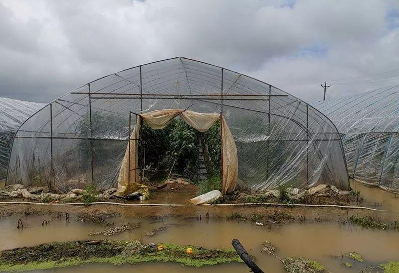暴雨过后,大棚蔬菜应该如何管理呢?