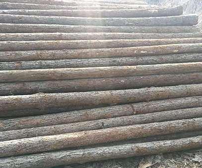 杉木桩的种植规范要点和选购事项