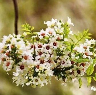 辽宁省2020年两个植物获新品种权证书