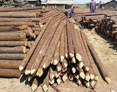 杉木桩做的木工板有什么优点
