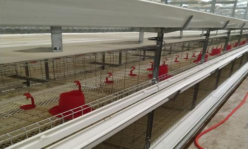 鸡笼鸭笼设备案例