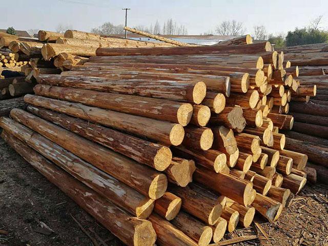 杉木桩可用于边坡治理