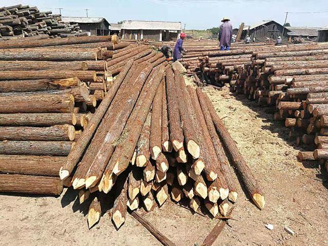 宣城宏文木业浅谈杉木桩的应用领域