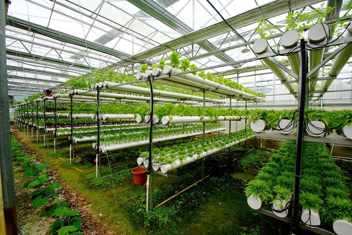 智能温室种植作物可实现全季节全天候生长