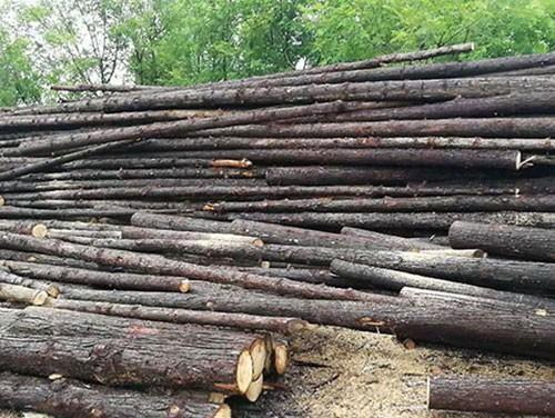 杉木原木厂家