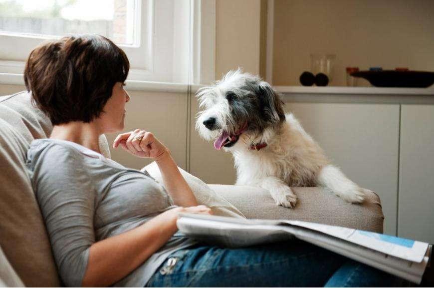 生命之声:宠物美容的兴起