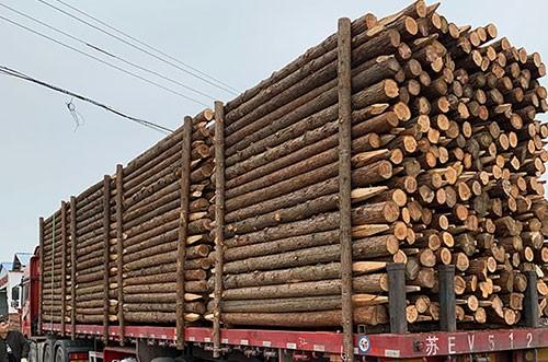 3米杉木樁裝車