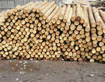 介绍杉木桩无法长期使用的因素