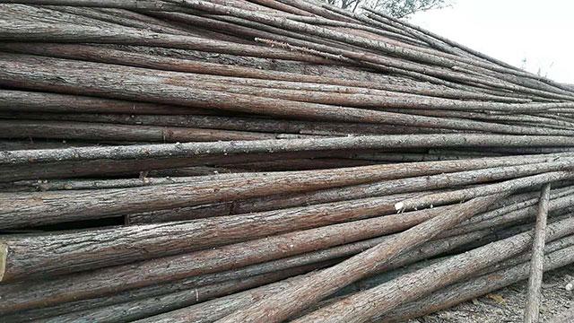 杉木原木价格
