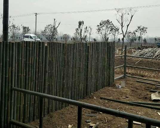 竹篱笆可以营造一种乡村氛围