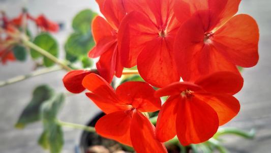 林草局植物新品种上海测试站正式挂牌