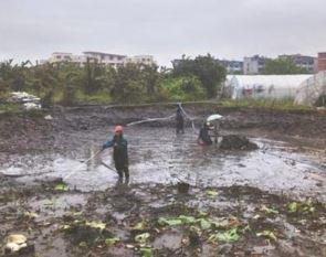 池塘食用鱼的饲养需要池塘清淤